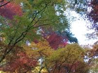 赤、黄色、緑が折り重なる紅葉が見事