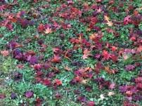 地面の緑と落ちた紅葉のコントラストが美しい